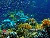 Красоты Красного моря