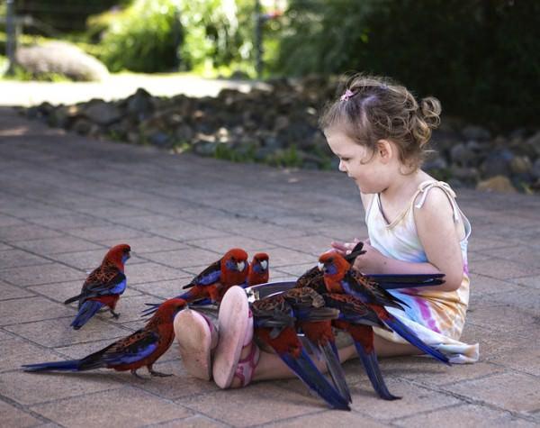 Птицы Израиля