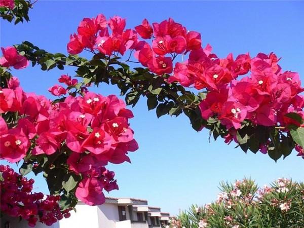 Цветы в генплане