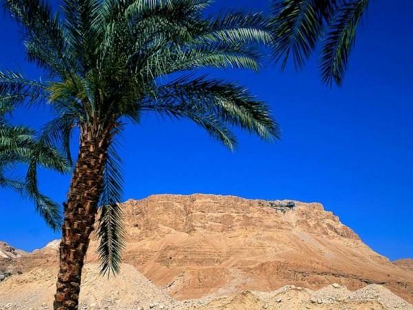 Рекламный тур в Израиль